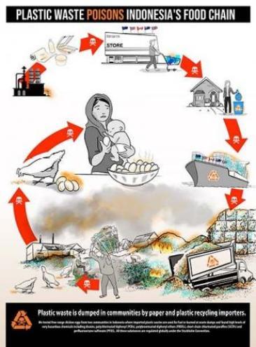 Infografik Pencemaran Plastik Rantai Makanan Indonesia
