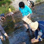 川エビ取り体験