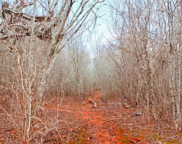 Arzien_Floresta_das_Estacas Morte na Floresta das Estacas