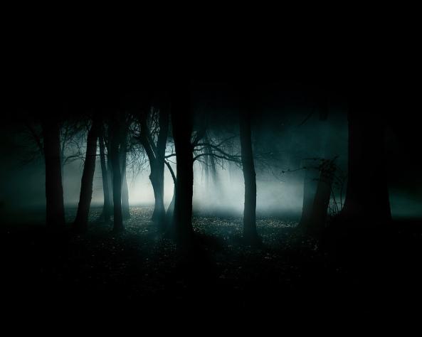 dark-forest-35836 Aventura CaLuCe: Um Merlin desafiado - o hóspede inesperado