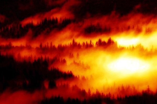 forest_flames_by_frankenstijn-600x399 Aventura CaLuCe: O amigo dos humanos