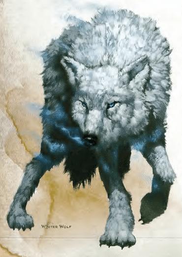 winter-wolf-2 Aventura CaLuCe: perseguição na neve