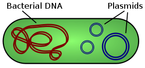 Organic extraction of DNA