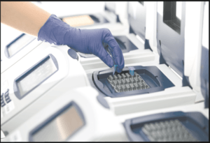 PCR amplification of extracted DNA fragment