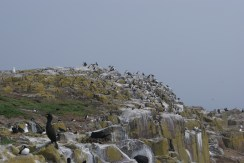 Lots of birds including many puffins!