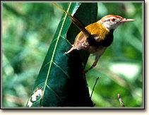 bird--sanctuary-orcha