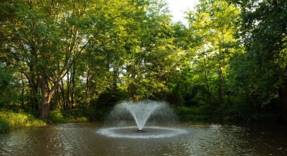 Picture of the pond.