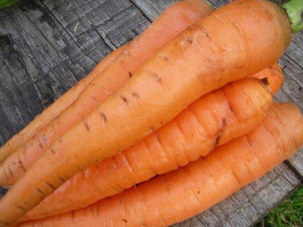 Почему у моркови желтая сердцевина