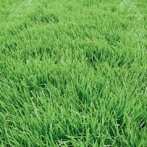 Выращивание спаржевой и стручковой фасоли