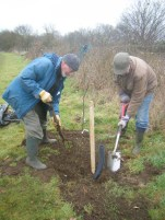 Tree planting in action