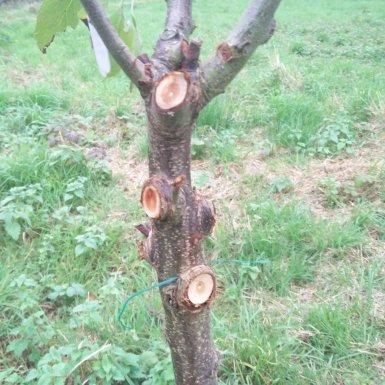 Ingrown tree labels