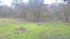 Before: the 2016 orchard in front, and the nettle forest wilderness in the back.