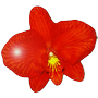 Orchidee95-logo