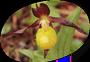 orchidee92-logo