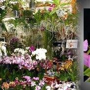 2ème bourse aux orchidées – juin 2018