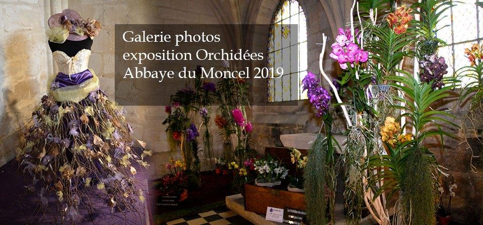 Exposition Orchidées – Abbaye du Moncel 2019