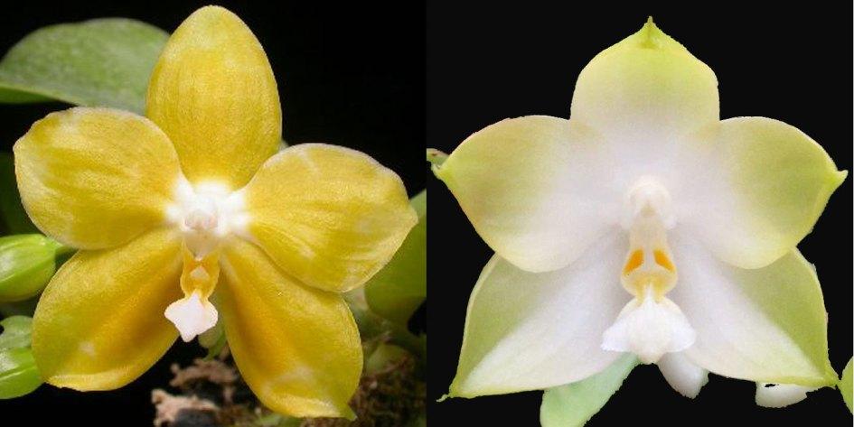 Orchideen Jungpflanzen