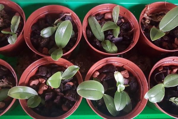 Orchideen-Kinderstube