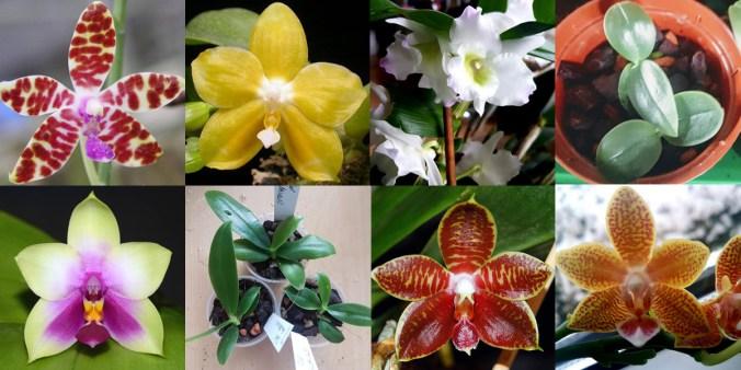 Crissy's Orchideen-Shop
