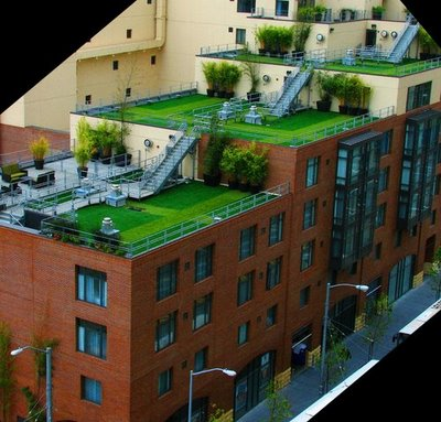 rooftop garden Easy Steps to Create a Rooftop Garden | Orchid Flowers