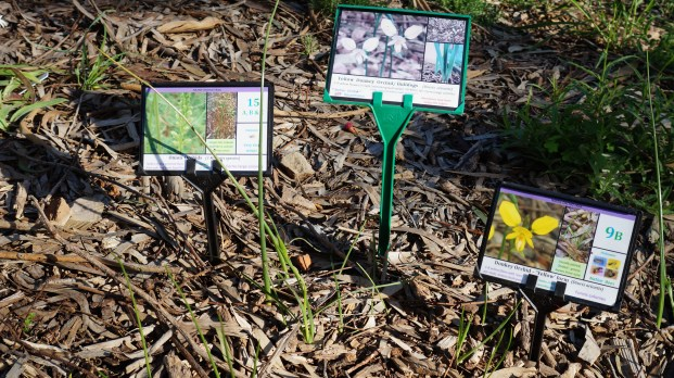 Vale Park Orchids