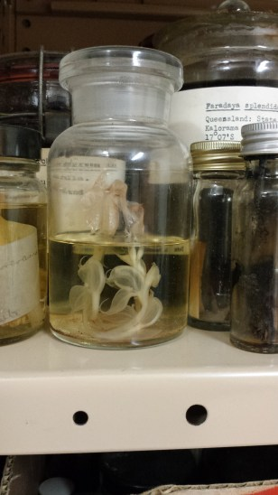 South Australian Herbarium