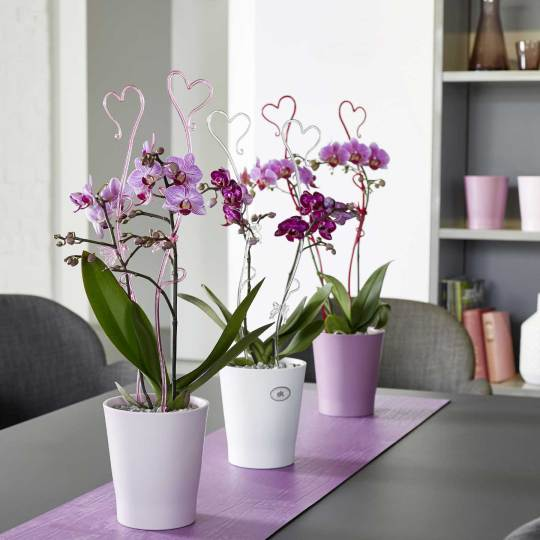 Orchid Stems & Stakes