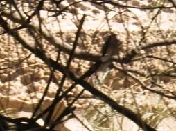 ave autóctona de Andalucia