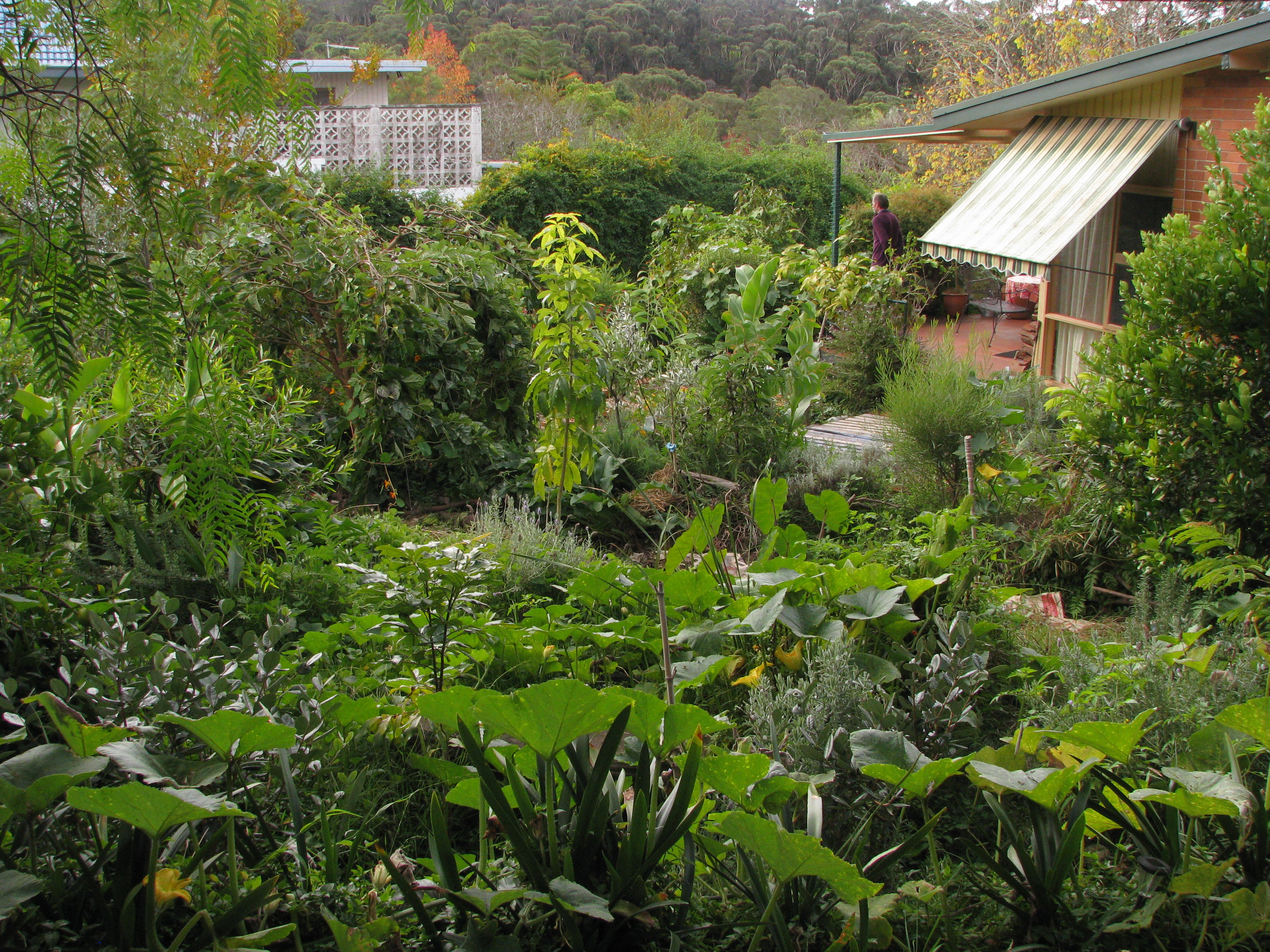 What Is Permaculture Gardening - Garden Ftempo on Backyard Permaculture Design id=21114