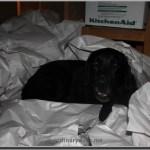unpacking the dog
