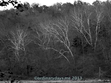 Ghost trees in Luray