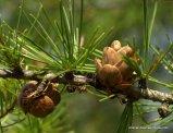 Mound/Wood Ant