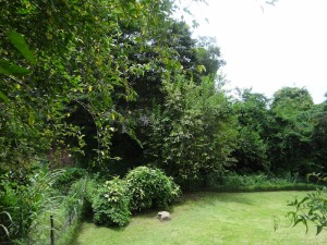 The right side and bottom of garden.  Those neighbours are on the other side of all that bush.