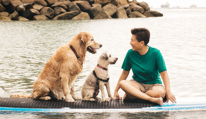 Dog Training the Positive Way with cheerfuldogs.com