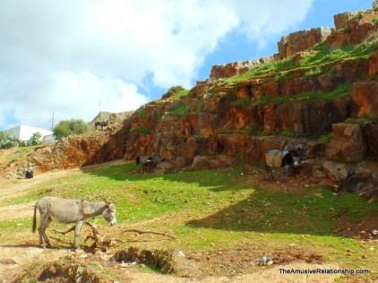 Field of donkeys beside the souk.