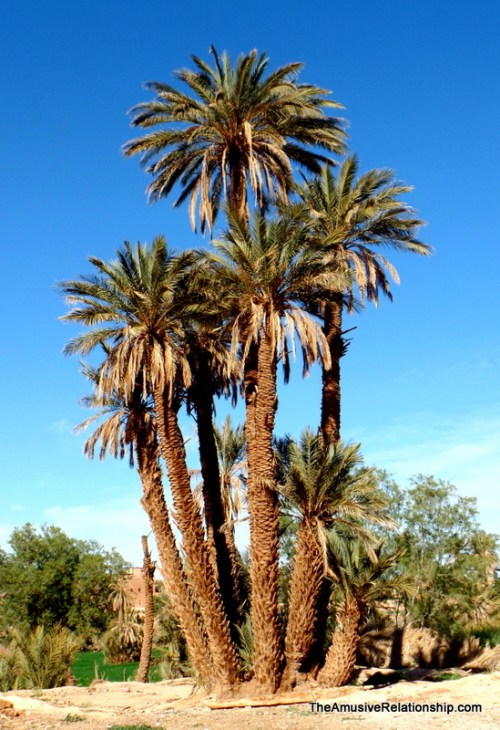 Yes, more date palms