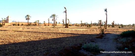 Drying palms