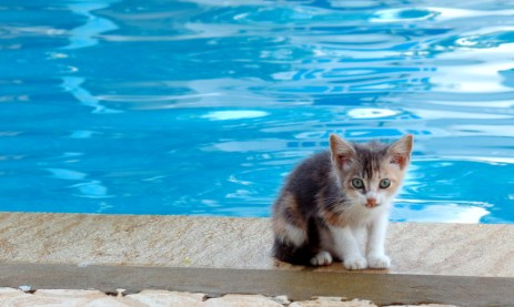 The hotel where IST was held had many, many cats. The wee ones were rather adorable.