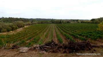 Vineyards are everywhere