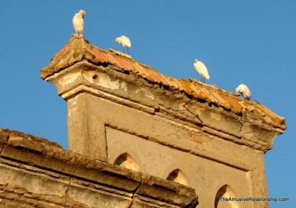 Storks on ruins