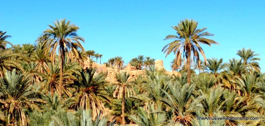 Desert foliage