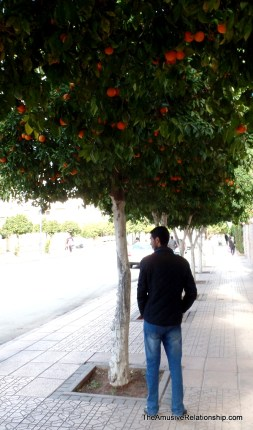 Taoufik and oranges