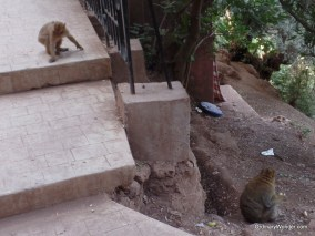 Macaques near the falls
