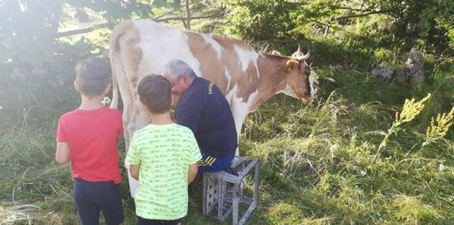 la muls vacine ciocanu