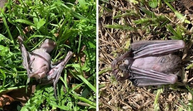 mass death of bats in Israel scared the locals