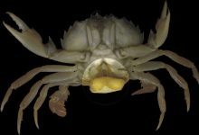 Photo of Zombies from the world of crustaceans