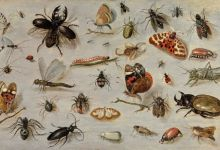 Mankind may disappear due to extinction of insects