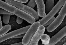 Scientists are amazed bacteria can remove toxic metals from cells