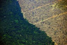 Every 6 seconds the Earth loses a portion of the rainforest the size of a football field