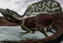 Spinosaurus brain spoke about his diet